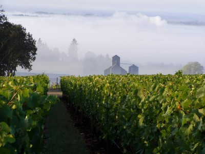 Chehalem Winery Tours