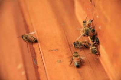 Hive to Table Salish Lodge
