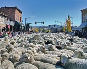 Idaho-trailing-of-the-sheep-event