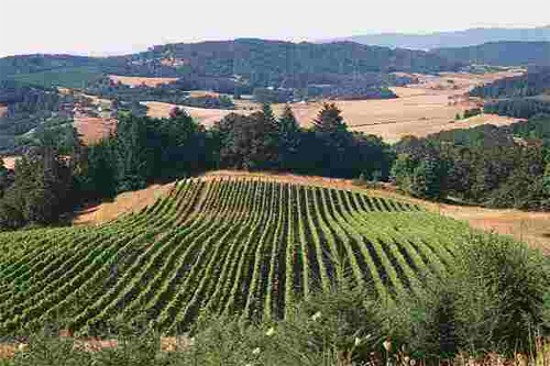 Willamette-Valley-Vineyards_Wineries