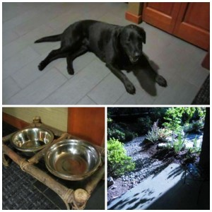 Salish Lodge & Spa Pet Friendly