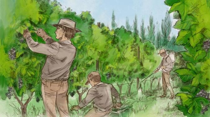 Piattelli Wine Vineyards